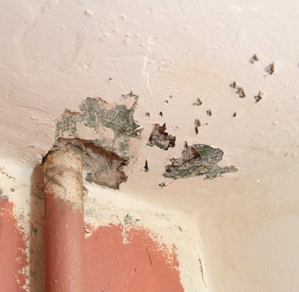 Все области с грибком и отслаивающейся штукатуркой лучше зачистить до бетона перекрытия.